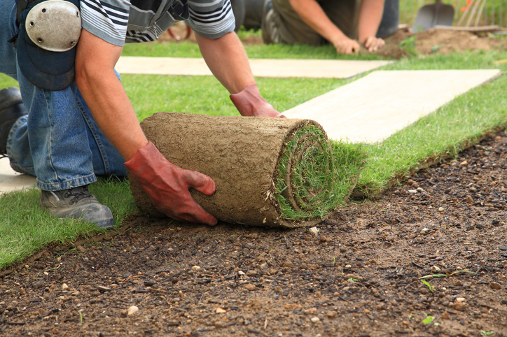 A lawn care specialist laying down sod in a residential yard.