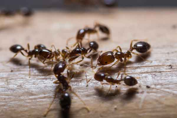 group of ants on a surface