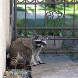 What Are Common Wildlife Problems in Florida