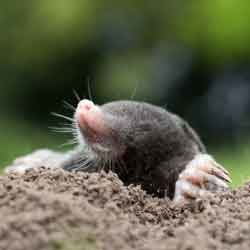 Guide to Avoiding Lawn Pests in Florida