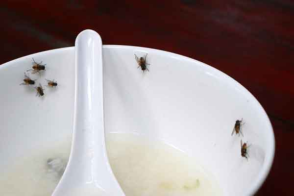 flies in a bowl of soup