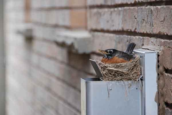 a bird sitting in its nest