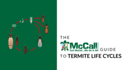 McCall termite life cycles graphic