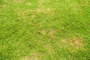 Setting Yourself Up for Lawn Success
