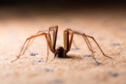 spider crawling on the ground