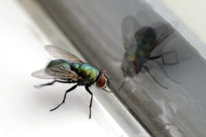 A house fly resting next to a windowsill.