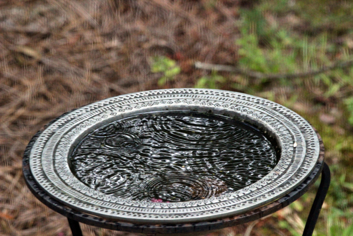 A bird bath filled with water.